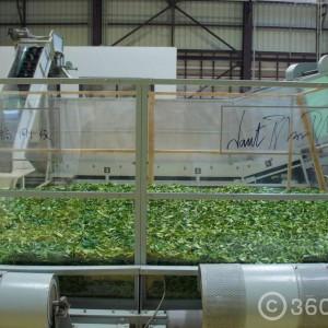 โรงงานชาเขียวญี่ปุ่นแท้