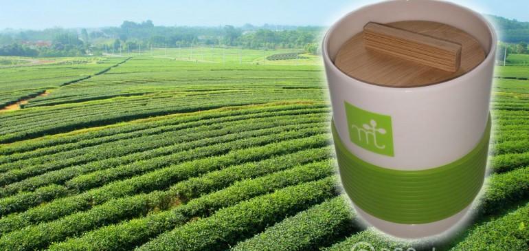 ชาเขียวญี่ปุ่นแท้ มีประโยชน์อย่างไร