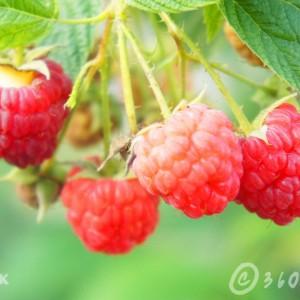 กิจการเพื่อสังคม-raspberry