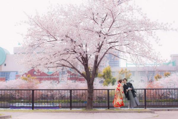 kimono-sakura-kiss